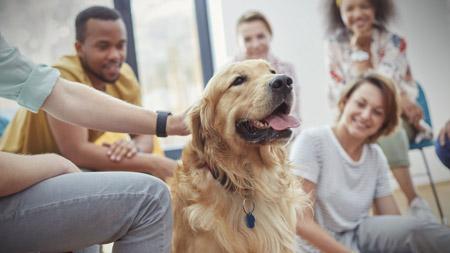 پت تراپی یا درمان به کمک حیوانات pet therapy