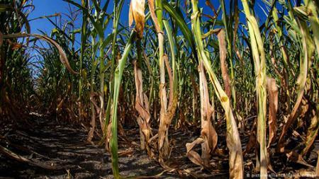 تشخیص نیاز گیاه به آب با حسگر