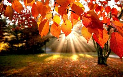 متن زیبا درباره پاییز Fall Text,جملات زیبای پاییز, جملات عاشقانه پاییز ,جملات زیبا درباره پاییز,پاییز, خزان, برگ ریزان, دوران کمال, اخرین قسمت, سومین دوره زندگی, ,fall, سقوط, پاییز, هبوط, افت, افتادن, خزان,beautiful sentences fall,